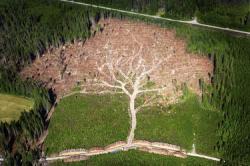 arbre-suede-insolite-meileur-photo-2012.jpg