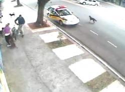 attack-pitbull-chien-attaque-femme-bagare-tue.jpg