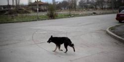 chien-1.jpg