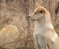 chien-incroyable-histoire-insolite-sauve-chine.jpg