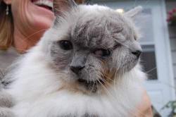 franck-louie-world-record-2012-guiness-monde-cat-chat-janus.jpg