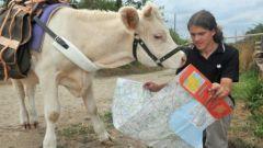 hadrien-camomille-vache-tour-du-monde-insolite-incroyable-histoire.jpg