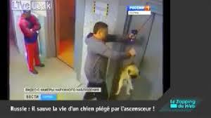 homme-a-sauve-la-vie-d-un-chien.png