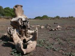 le-cimetiere-des-elephants-insolite-etrange-mystere-histoire-incroyable.jpg