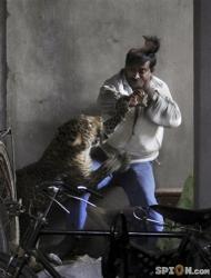 wilder-leopard-skalpiert-passant-attaque-lion-lout-chien-homme.jpg